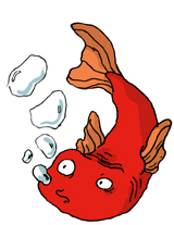 Marion Duclos - Le poisson blog